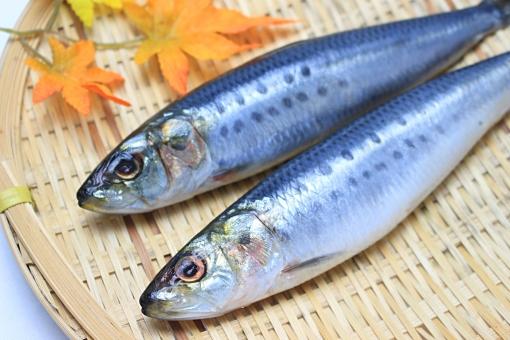 【笠間市東平】週3日~OK♪スーパーでの鮮魚加工業務/日払いサービス有♪未経験者でも始められる0