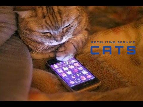 株式会社CATS(キャッツ)